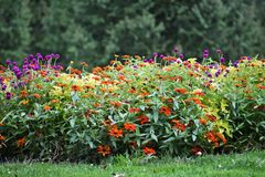 Beautiful Flower Bed. With woodsy background Royalty Free Stock Images