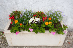 Beautiful flower bed. Colorful window box in Charente Maritime France Stock Images