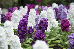 Beautiful flower bed Royalty Free Stock Image