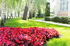 Beautiful flower-bed Stock Photo