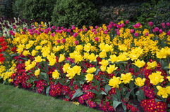 Beautiful flower bed in the spring park. Stock Photos