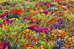 Beautiful flower bed in summer Stock Image