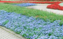 Beautiful flower beds Stock Photos