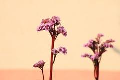 Beautiful flower on beige background Stock Image