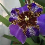 Beautiful flower blooming in Spring. Beautiful flower blooming during Spring royalty free stock image
