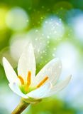 Beautiful flower on blurred green background Royalty Free Stock Photos