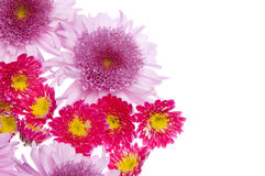 Beautiful Flower Border Image Royalty Free Stock Image
