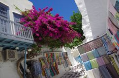 Flowers bougainvillea in Santorini, Greece Stock Image