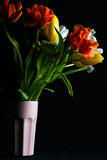 Beautiful flower bouquet of colorful tulips in pink vase on black background Stock Images