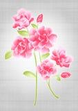 Beautiful flower bouquet design. Simple background Stock Photos