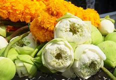 Pile of Lotus Flowers with Yellow Marigold Wreaths. Beautiful Flower, Bouquets of White Lotus or Water Lily Flowers with Yellow Marigold Wreaths Preparing to Pay stock photography