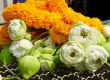 Pile of Lotus Flowers with Yellow Marigold Wreaths. Beautiful Flower, Bouquets of White Lotus or Water Lily Flowers with Yellow Marigold Wreaths Preparing to Pay royalty free stock photography