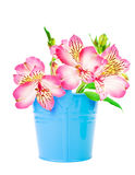 Beautiful flower in a bucket Royalty Free Stock Photos