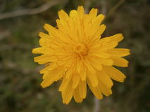 A beautiful flower Stock Image