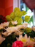White chrysanthemums and milkweeds. Beautiful flower for celebration on Christmas and happy new year, romance,present, gift, flora,flower, happy, couple , love royalty free stock photography