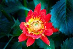 Beautiful flower close up inside Singapore botanical garden. Royalty Free Stock Photos