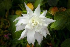 Beautiful flower close up inside Singapore botanical garden. Stock Photos