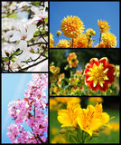 Beautiful flower collage. Collage with colorful and beautiful flowers Royalty Free Stock Image