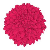 Beautiful flower Dahlia isolated on white background. . for design greeting cards and invitations of the wedding, birthday, Valent Royalty Free Stock Photos