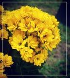 Beautiful Flower. Displays nature's true beauty Stock Image