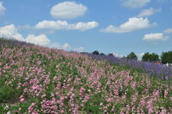 Beautiful flower field on the hill Stock Photo