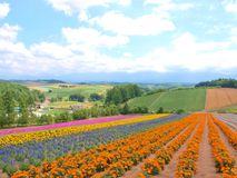 Beautiful flower field on the hill Stock Images