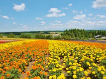 Beautiful flower field on the hill Royalty Free Stock Photos
