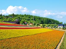 Beautiful flower field on the hill Royalty Free Stock Photo