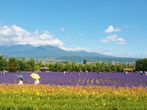Beautiful flower field and many visitors on the hill Stock Photos