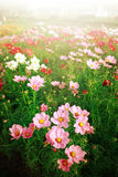 Beautiful flower field Royalty Free Stock Images