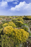 Beautiful flower field in Sagres Royalty Free Stock Photography