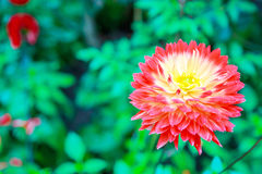 Beautiful flower in fresh green Stock Images