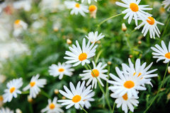 Beautiful flower in fresh green Royalty Free Stock Images