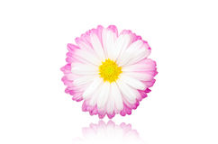 Beautiful flower Royalty Free Stock Photo