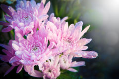 Beautiful flower with fresh water royalty free stock images