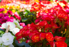 Beautiful flower garden Stock Images