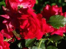Beautiful flower. Garden stock image