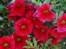 Beautiful flower. Garden stock photography