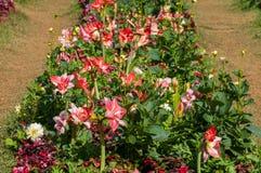 Beautiful flower in garden Stock Image