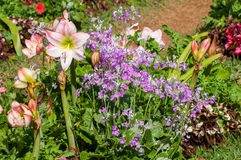 Beautiful flower in garden Royalty Free Stock Image