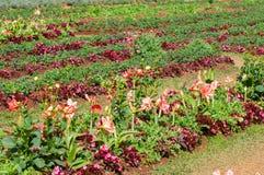 Beautiful flower in garden Stock Photography
