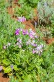 Beautiful flower in garden Stock Images