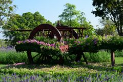 The beautiful flower garden in Bangkok`s big city park. royalty free stock images