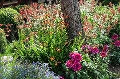 Beautiful flower garden royalty free stock photography