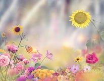 Beautiful Flower Garden Stock Image