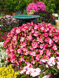 Beautiful Flower Garden with bird bath Royalty Free Stock Images