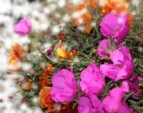 Beautiful flower garden Royalty Free Stock Image