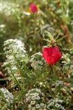 Beautiful flower garden Stock Photography