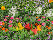 Beautiful flower garden Royalty Free Stock Photos