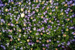 Beautiful flower garden with colorful blooming flowers Royalty Free Stock Photography